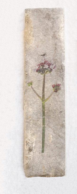 Image of ceramic tile with verbena design