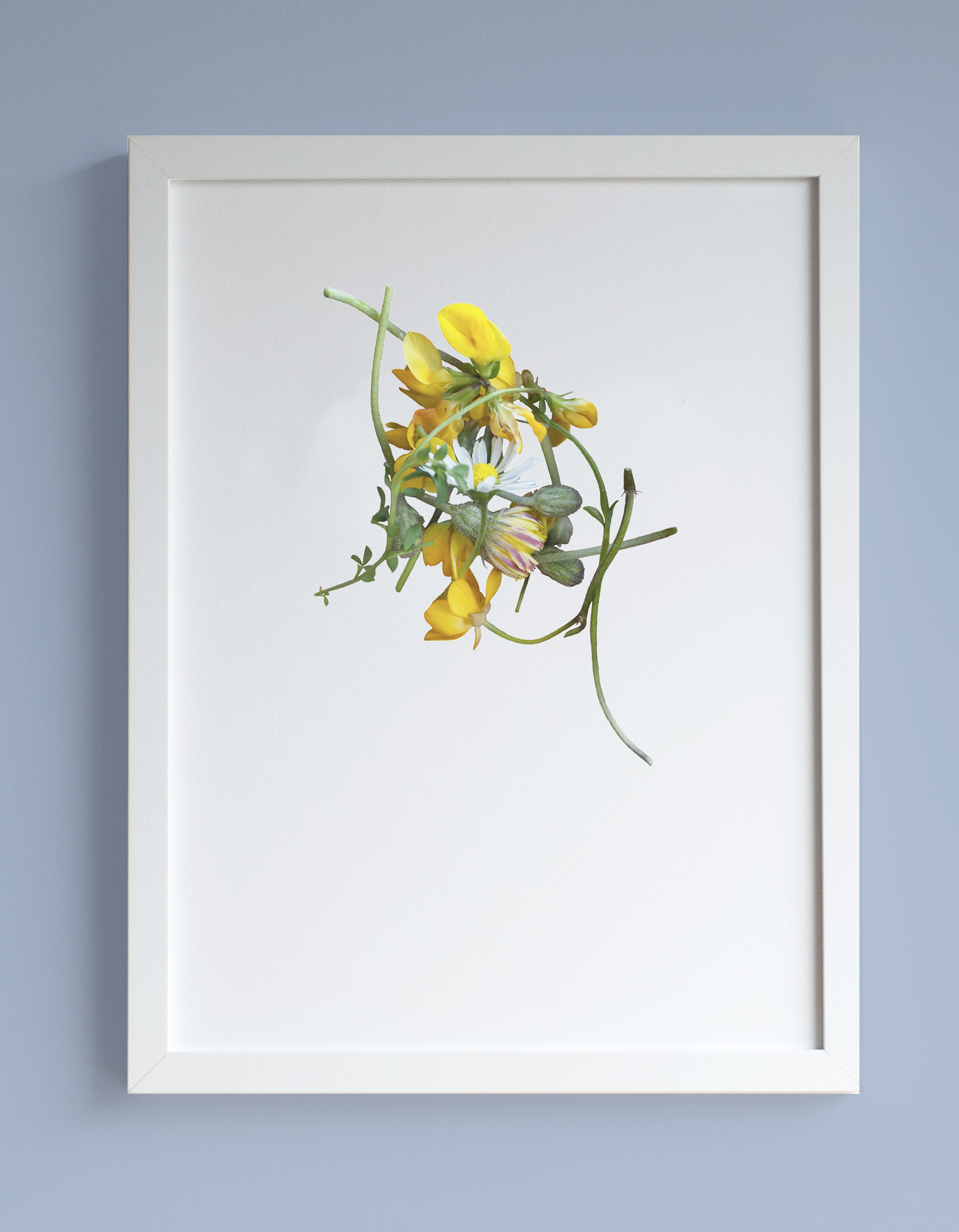 Image of framed print featuring buttercups, dandelions and a daisy