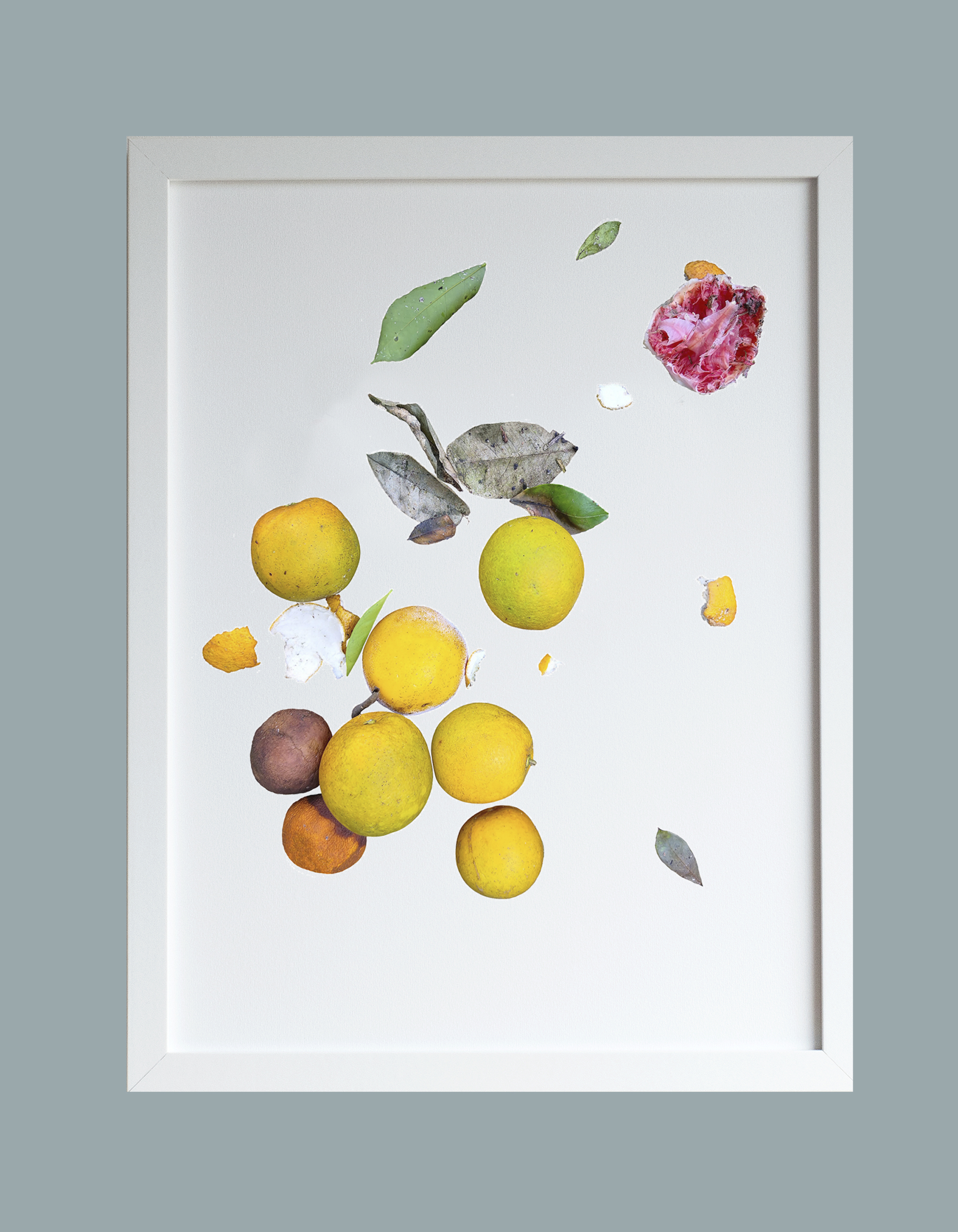 Image of framed print featuring a decaying citrus photo design
