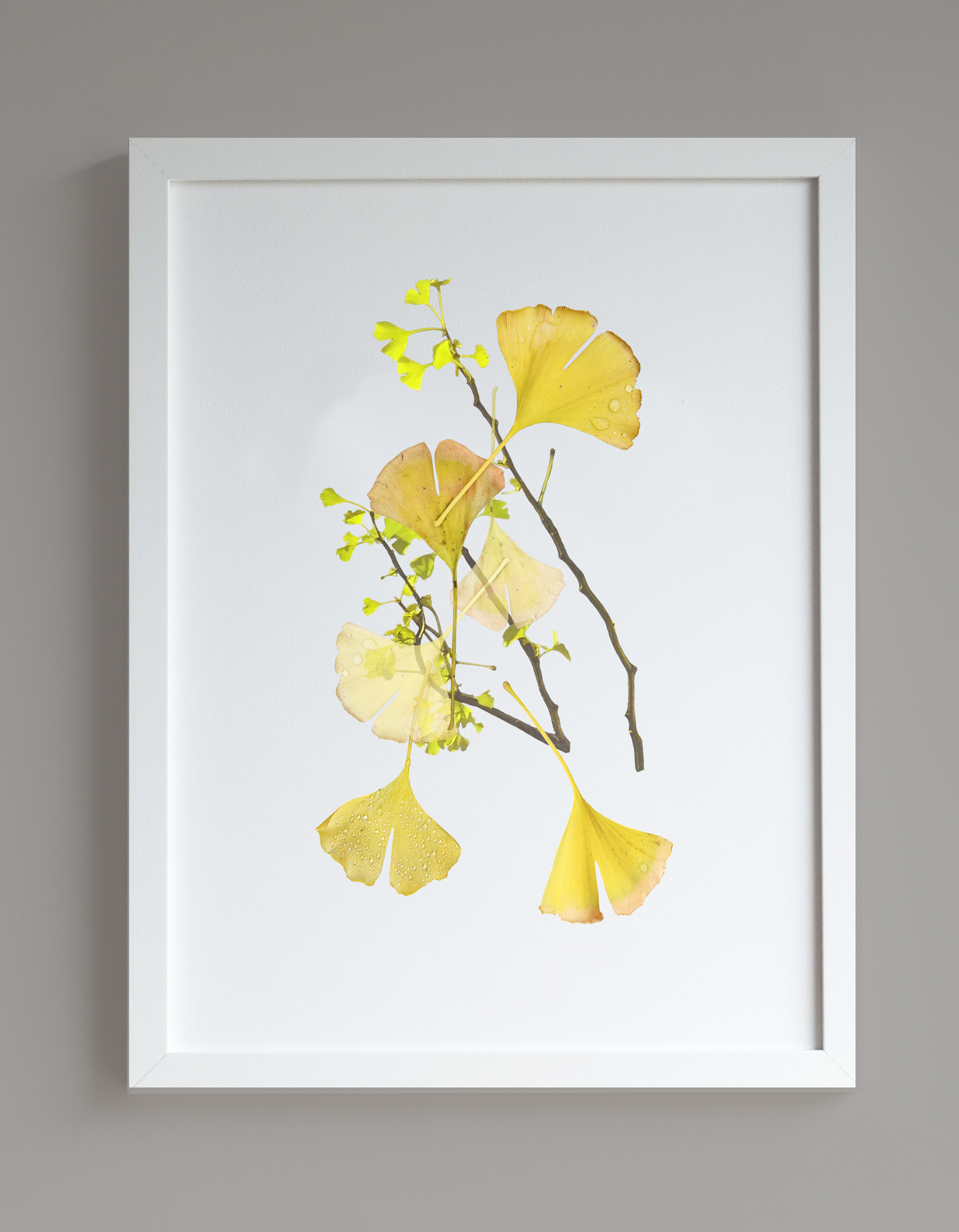 Image of framed print featuring ginkgo collage photographic print