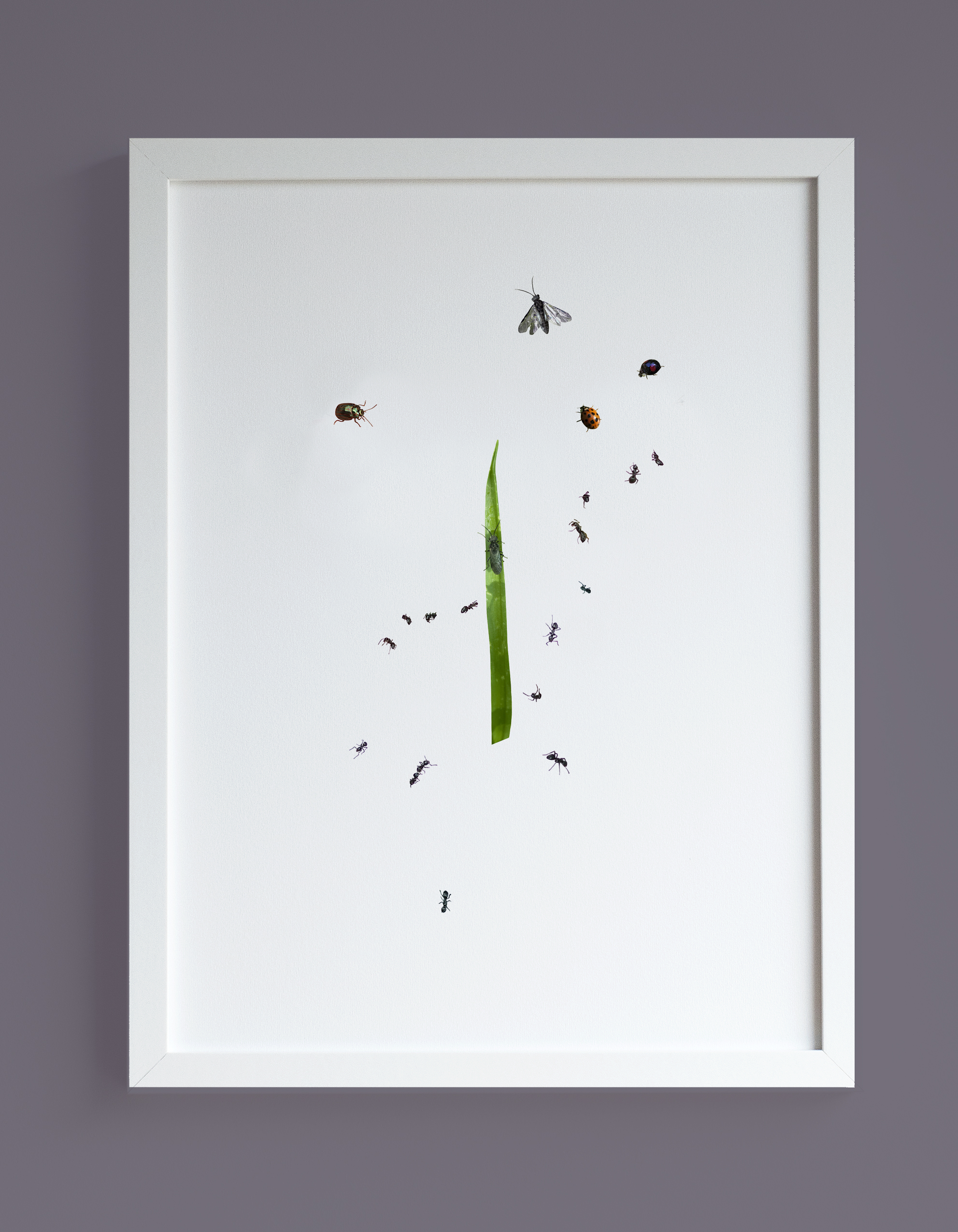 Image of framed print insects and a blade of grass