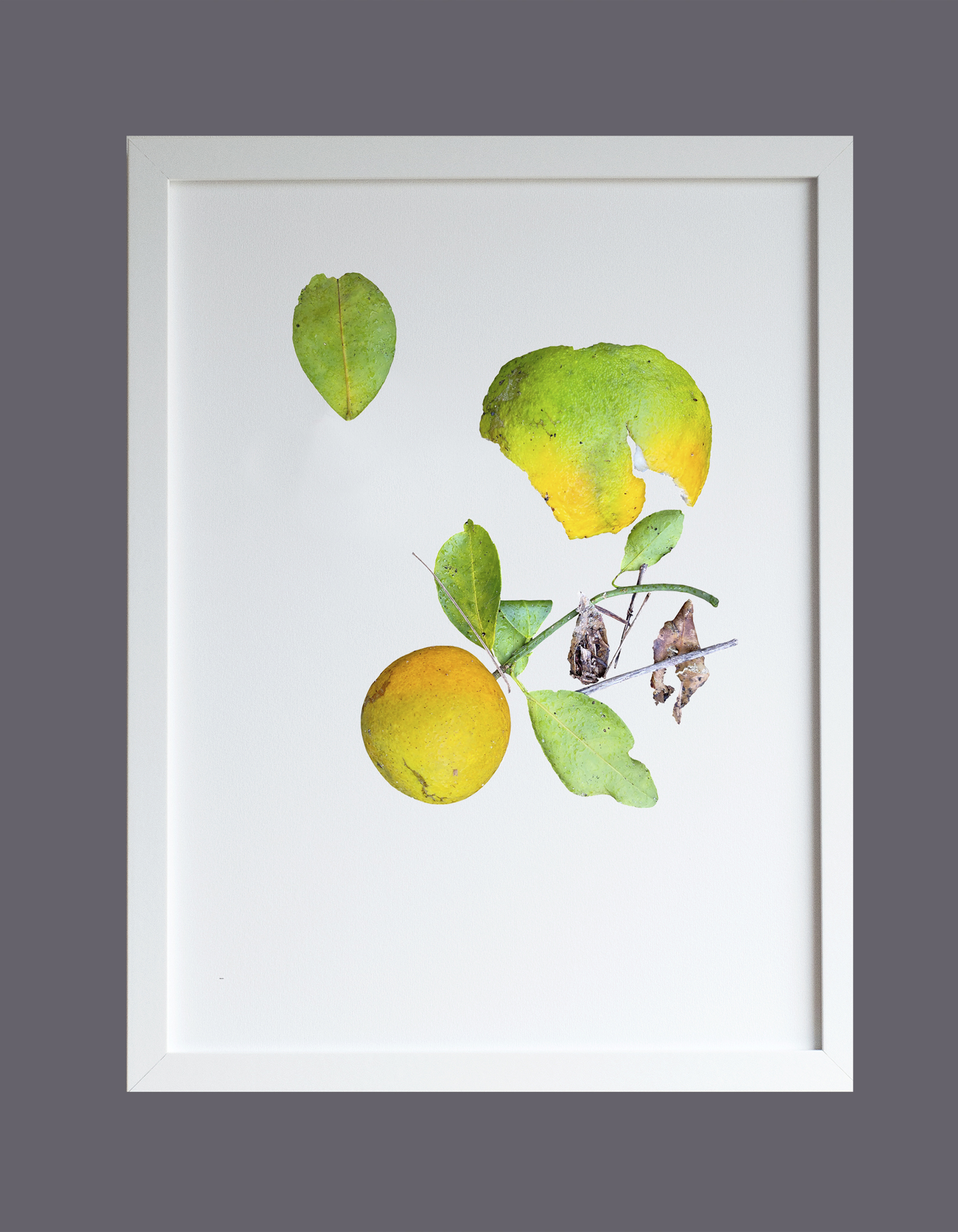 Image featuring a framed print of pomelo and orange peels photo design