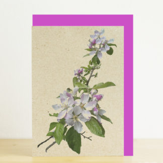 Image of greeting card featuring cherry blossom photo print