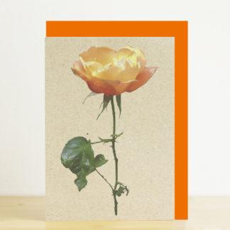 Image of greeting card featuring orange rose photo print