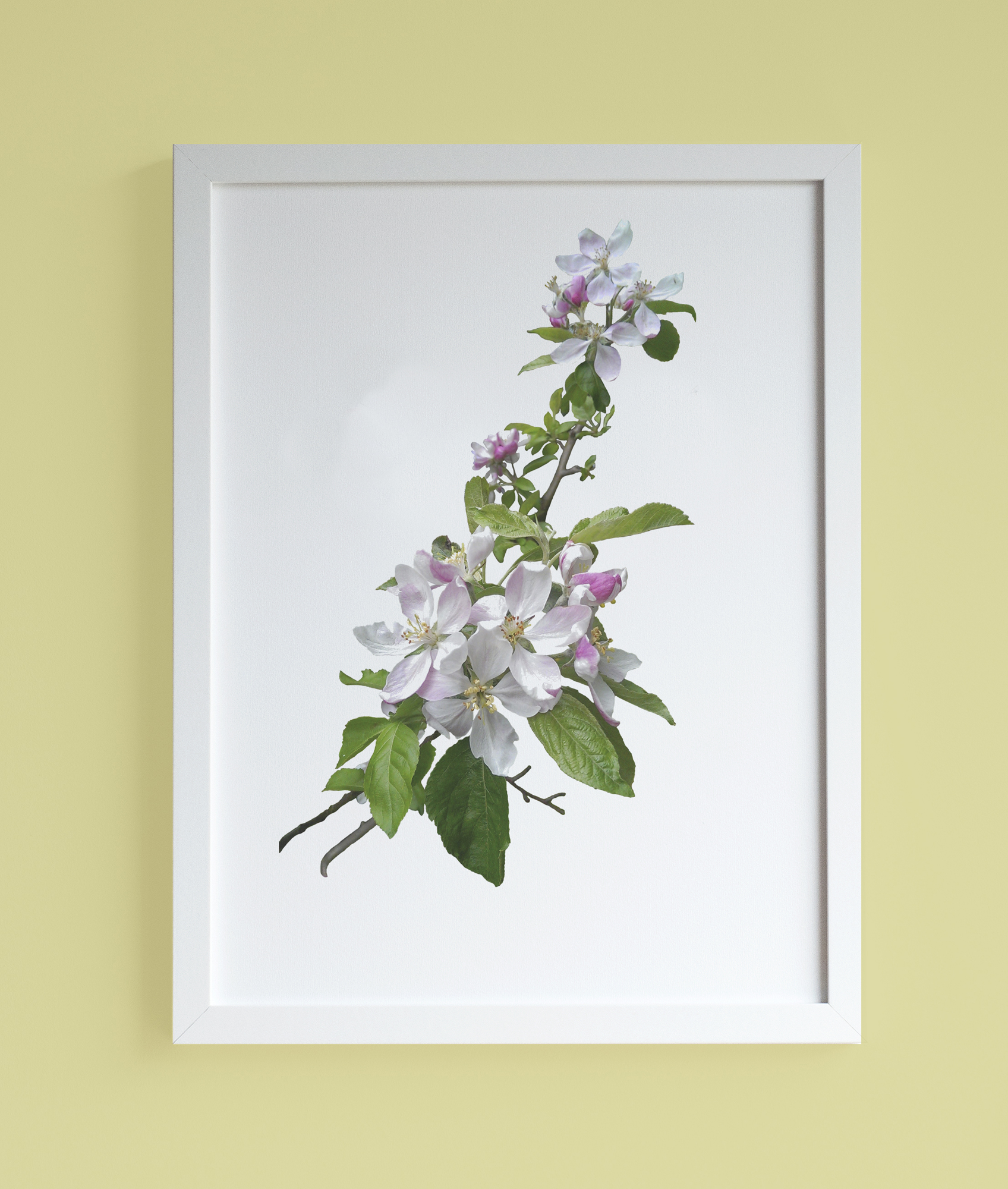 Image of framed print featuring cherry blossom photographic print
