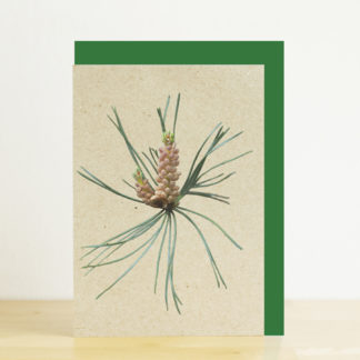 A6 greeting card featuring a photo design of a Scots pine cone