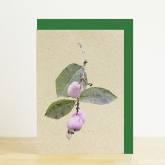 A6 greeting card featuring a photo design of snowberries