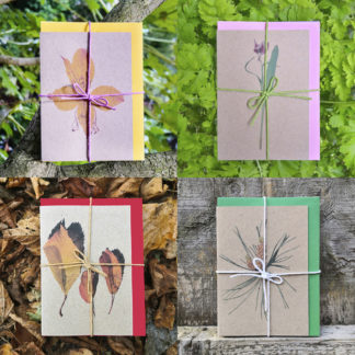 Photo of tFour sets of seasonal note cards featuring botanical photo designs
