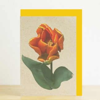Greeting card featuring an orange tulip and yellow envelope